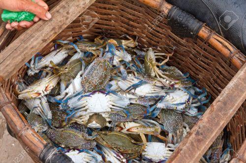 a-basket-of-crabs-in-Ham-Ninh